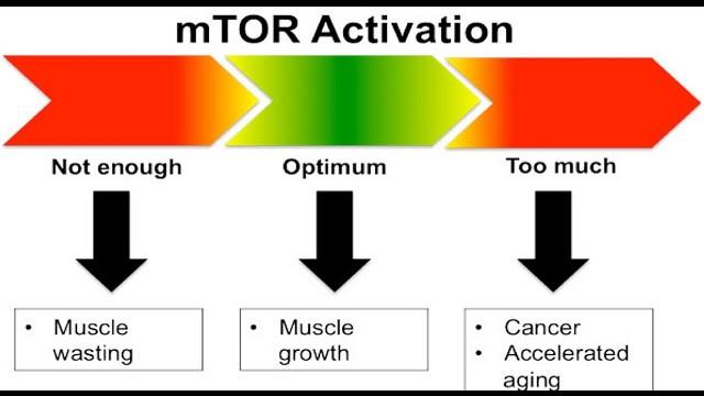 mTOR Bodybuilding